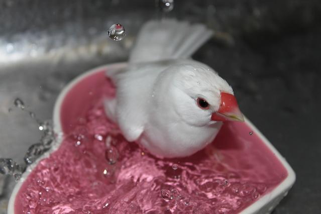 水浴びをしているところです